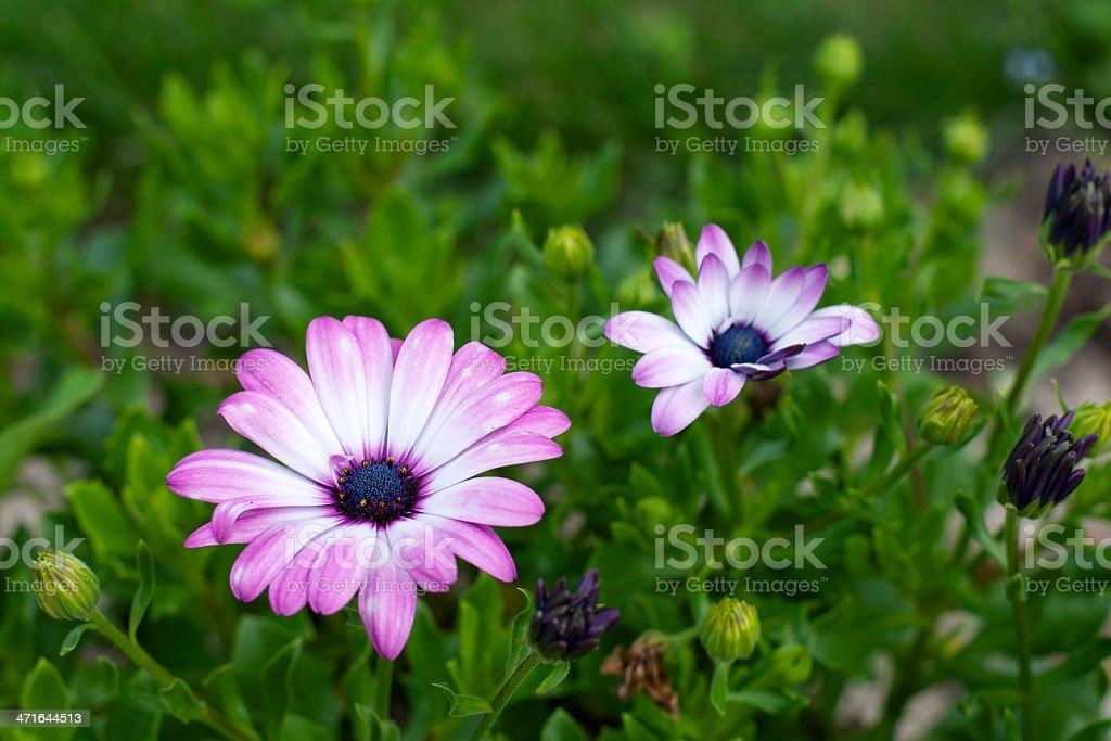 flower Lizenzfreies stock-foto