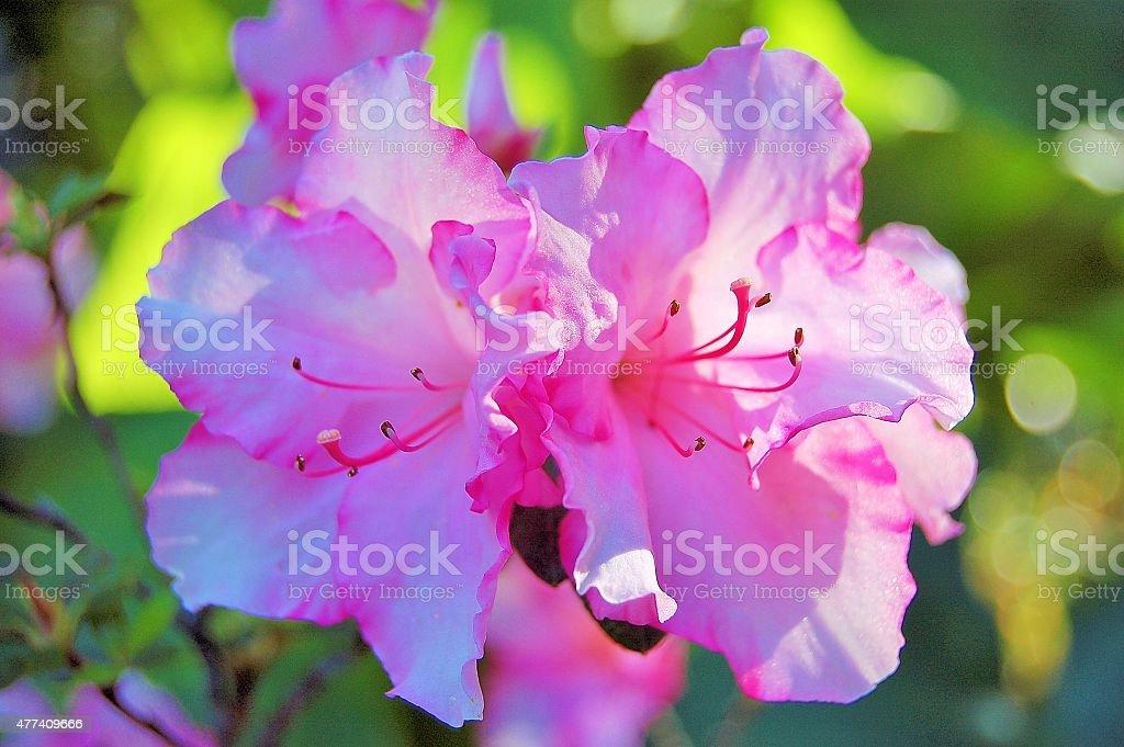 Flower zbiór zdjęć royalty-free