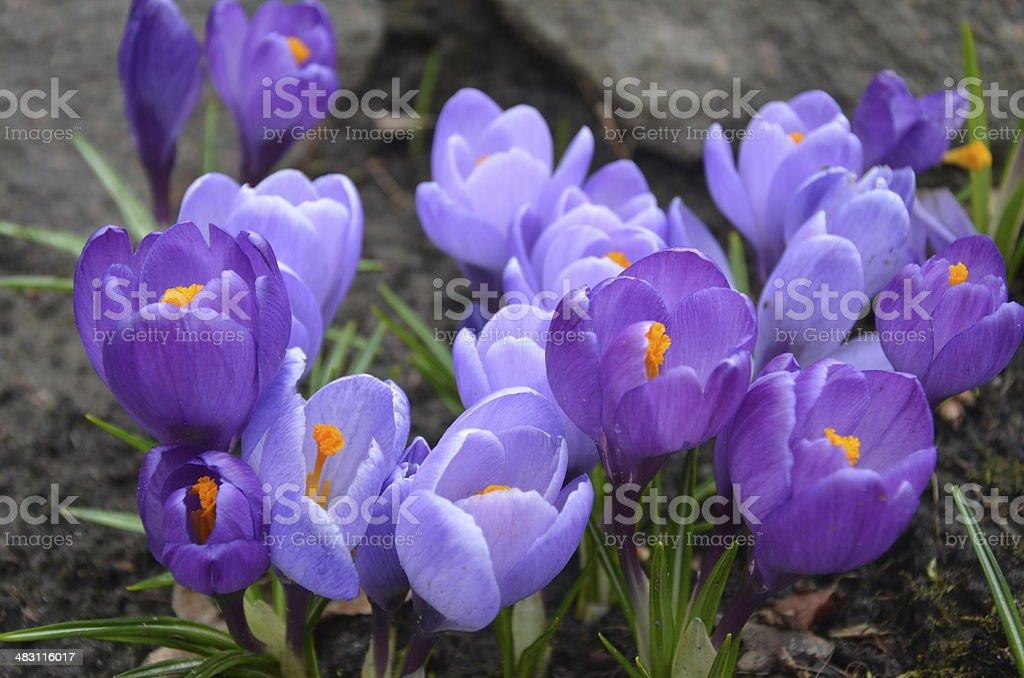 Uma flor foto de stock royalty-free