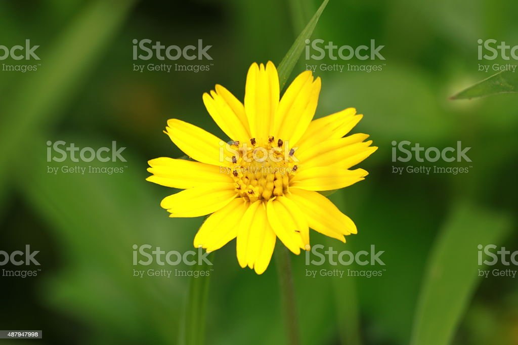 Flower stock photo
