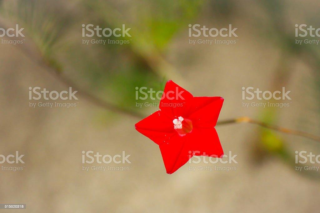 Flor. foto de stock royalty-free