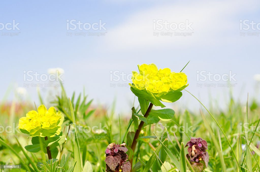 flower royalty-free stock photo