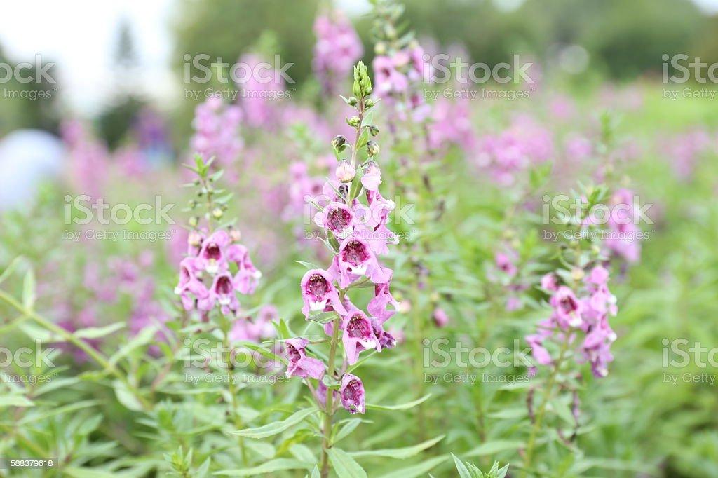 flower pink beautiful. stock photo
