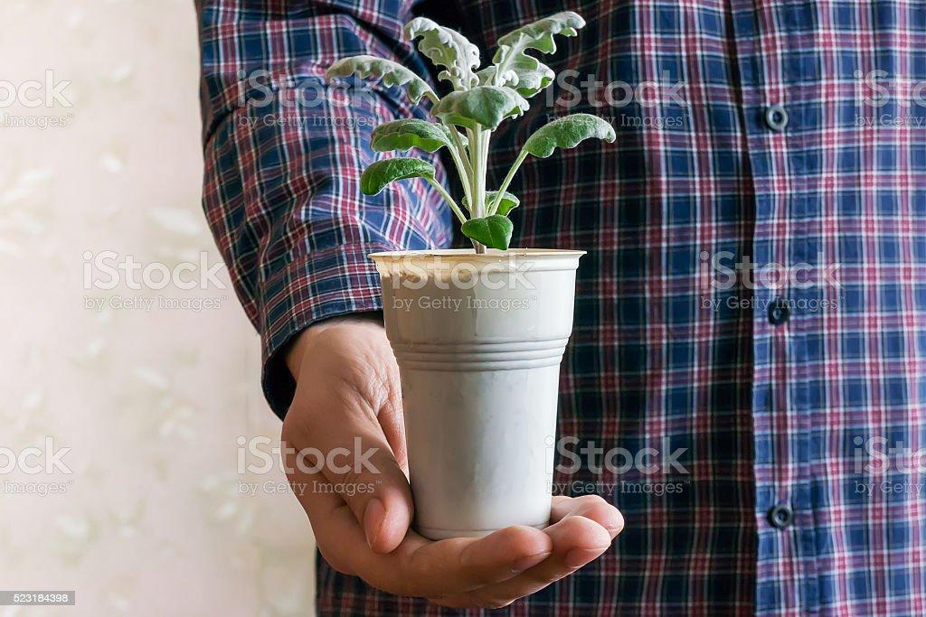 Planta de flores em Vaso foto de stock royalty-free