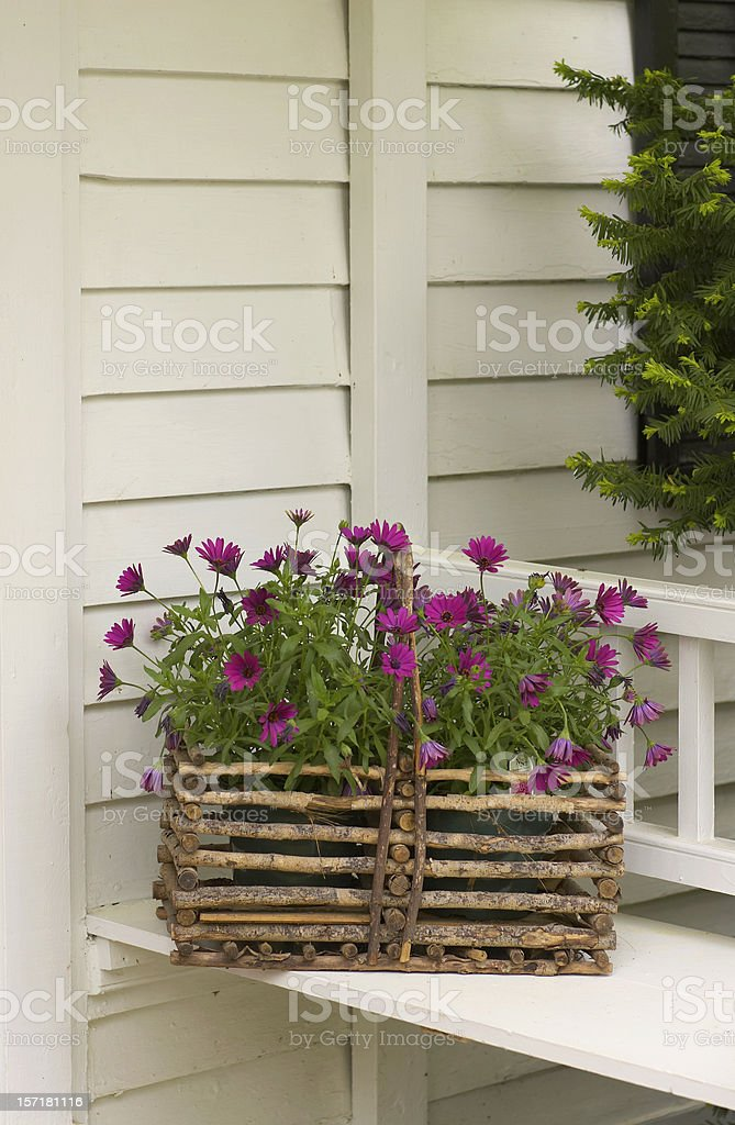Flower Planter on the bench stock photo