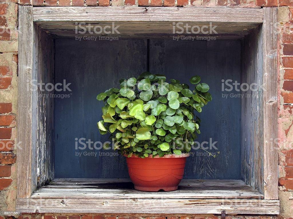 Flower Pot in a Window stock photo