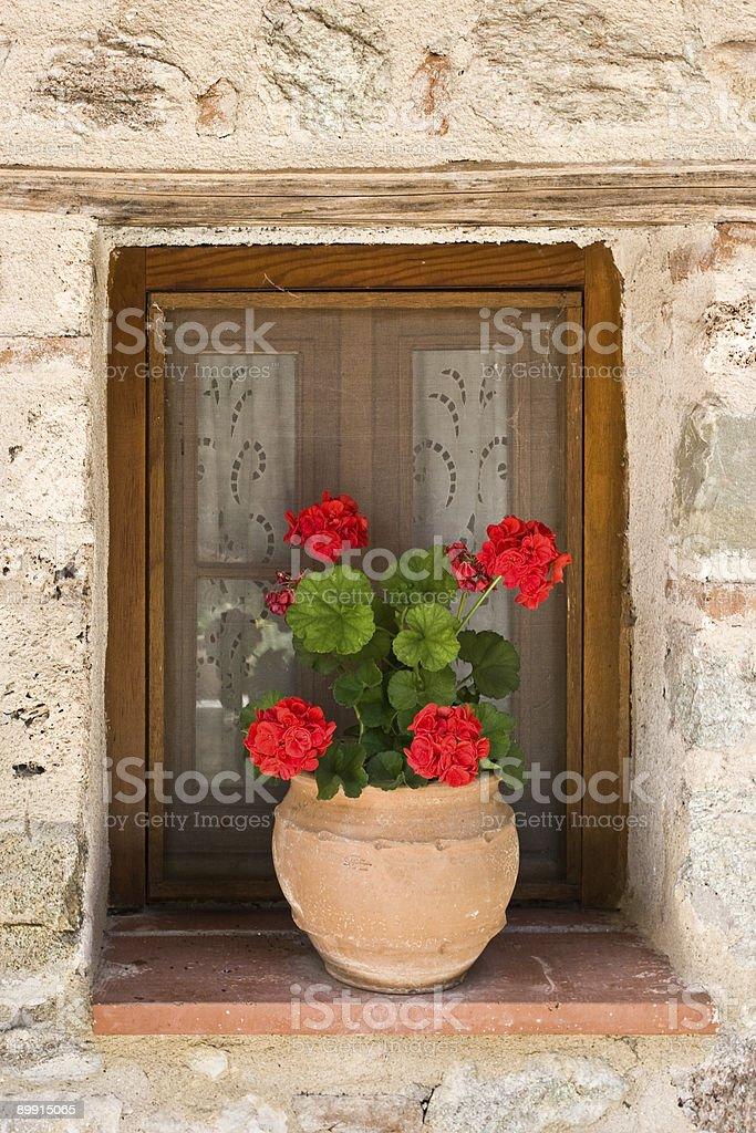 Flower pot in window royalty-free stock photo