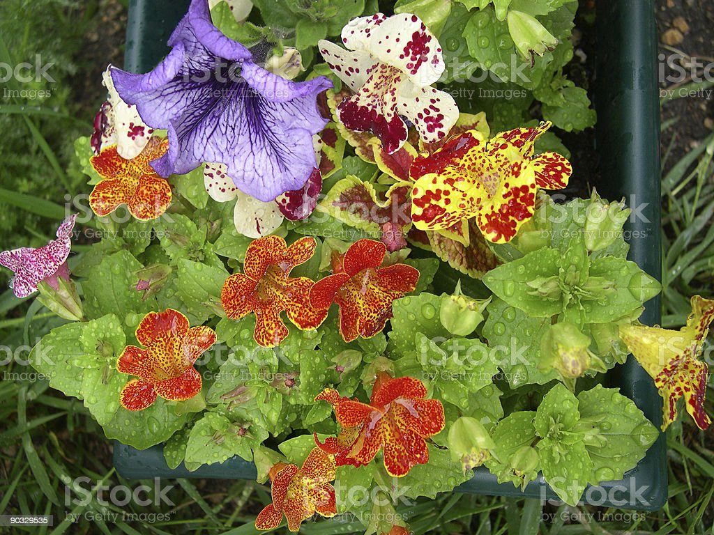 Flower Pot royalty-free stock photo