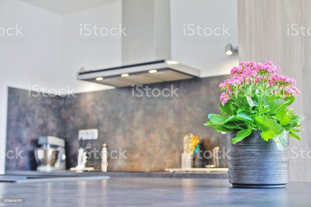 Flower pot plant in modern kitchen stock photo