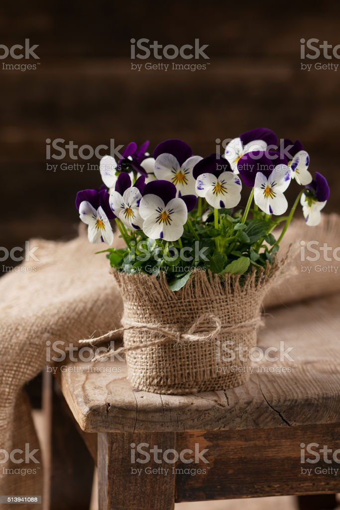 Flower pot with white, violet pansies. stock photo
