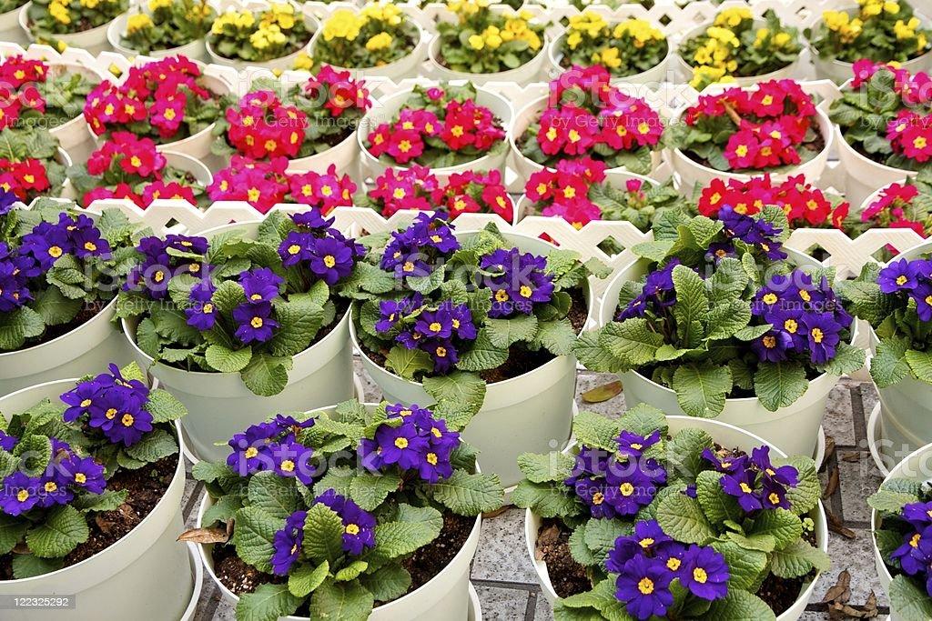 Flower Pots in Hong Kong Park stock photo