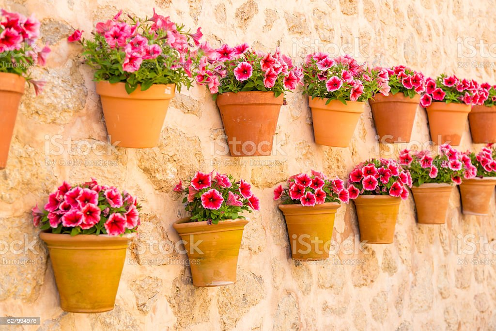 Flower pots on wall stock photo