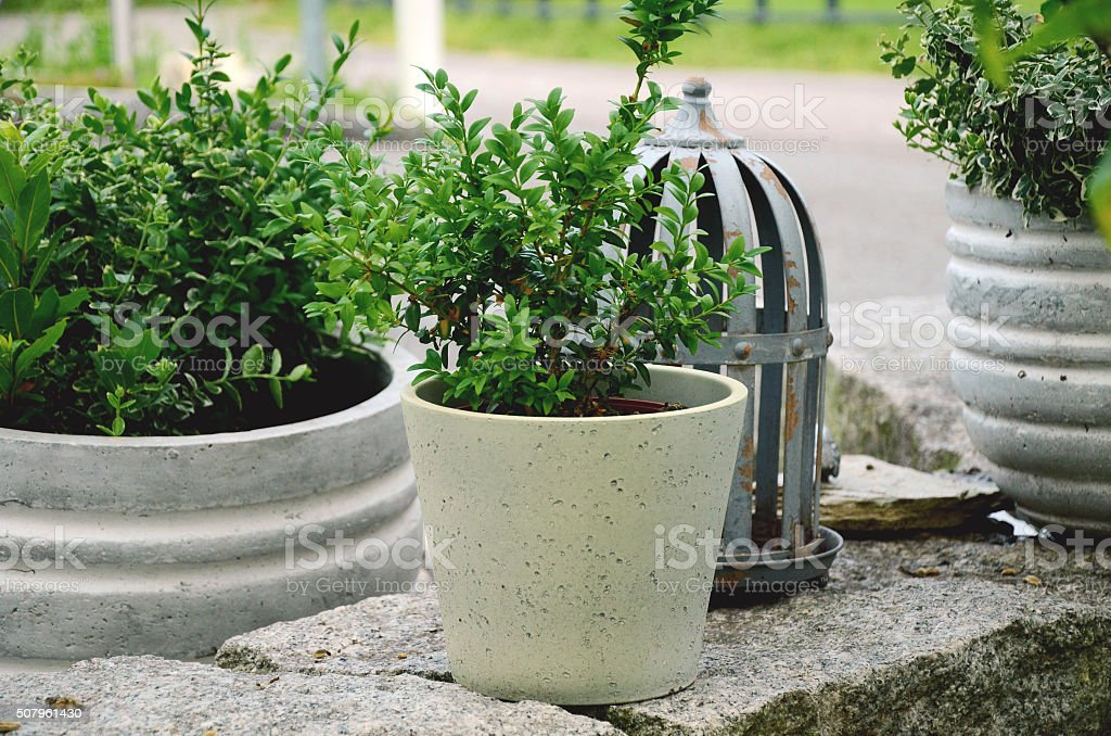 Flower pots with green plants stock photo