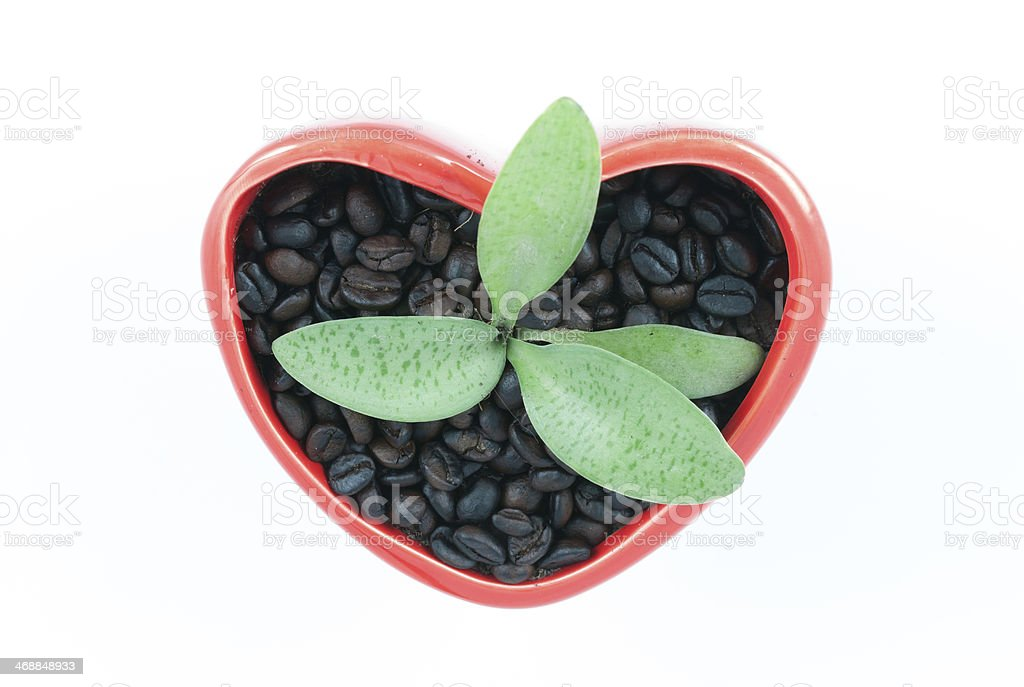 flower pots with heart shapes royalty-free stock photo