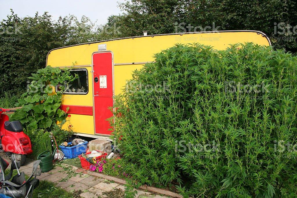 Flower Power Hemp Cannabis Amsterdam Camping royalty-free stock photo