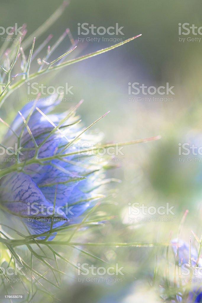flower power royalty-free stock photo