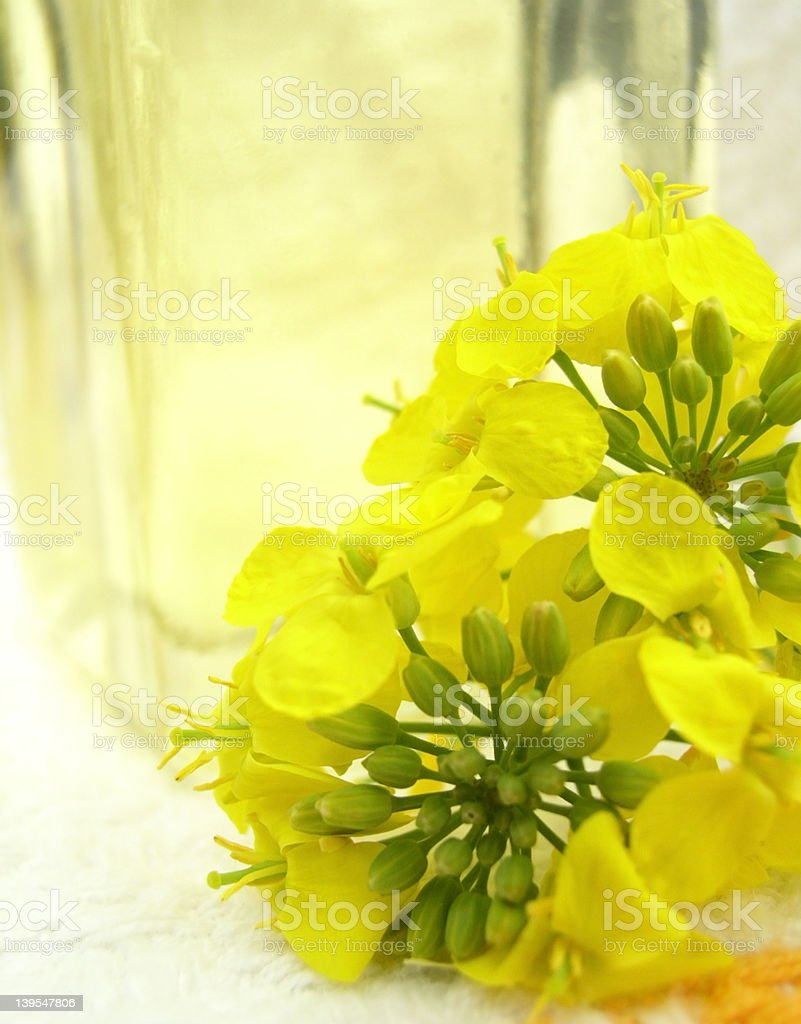 flower & rape oil royalty-free stock photo