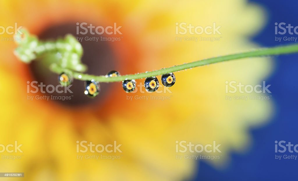 Flower refraction in a raindrop stock photo