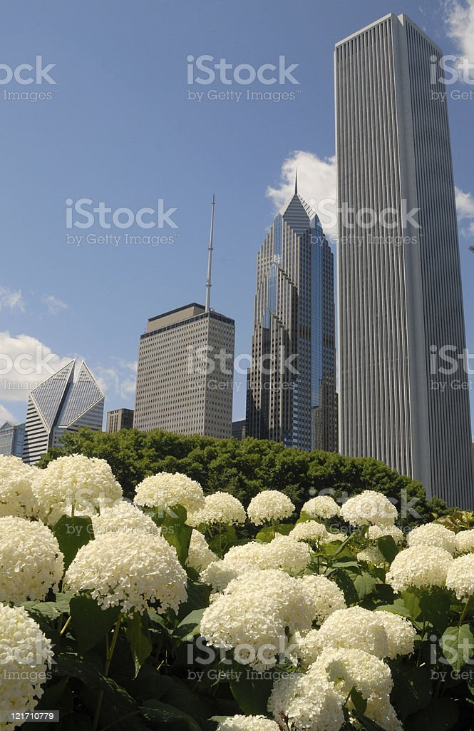 Flower relief amid Chicago skyscrapers stock photo