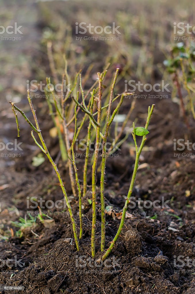 Flower seedlings in the park stock photo