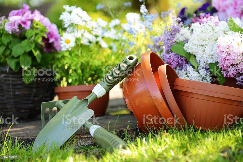 flower seedlings royalty-free stock photo