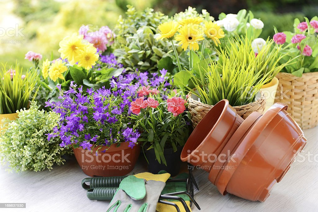 flower seedlings royalty-free stock photo