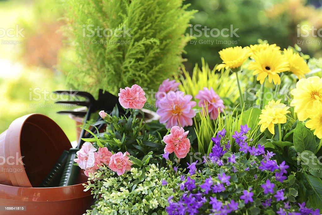 flower seedlings stock photo