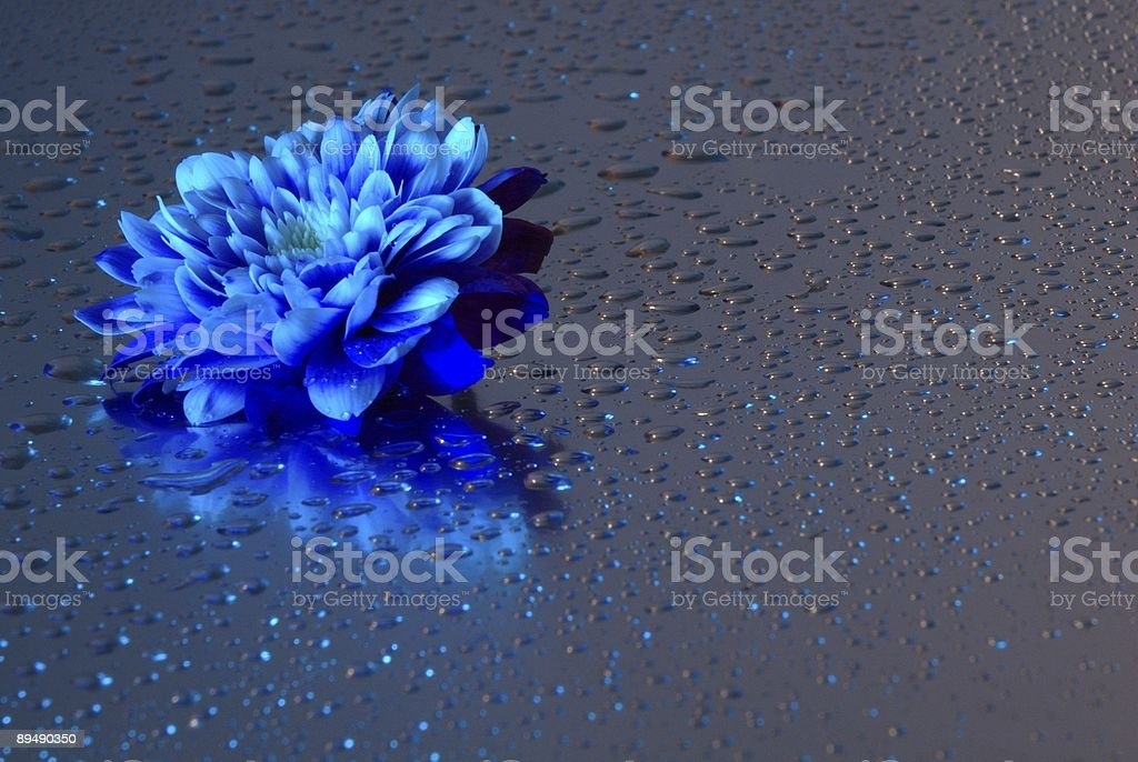 Flower seen in led-light royalty-free stock photo