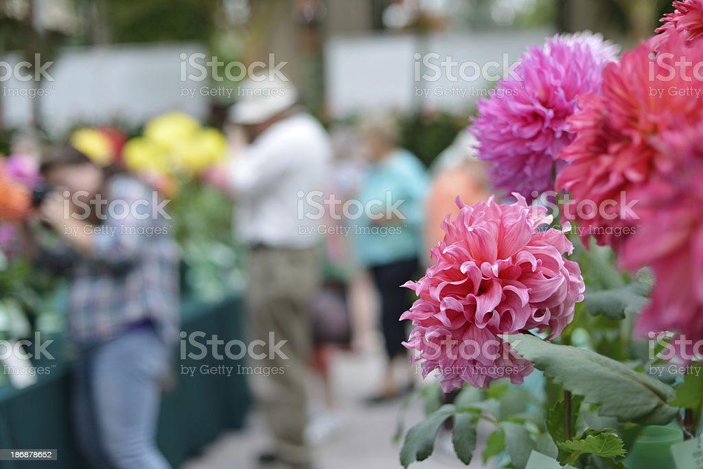 Flower Show royalty-free stock photo