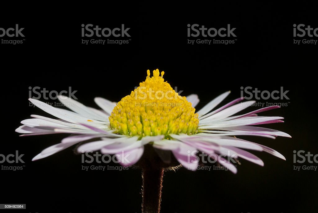 Flower, side view stock photo