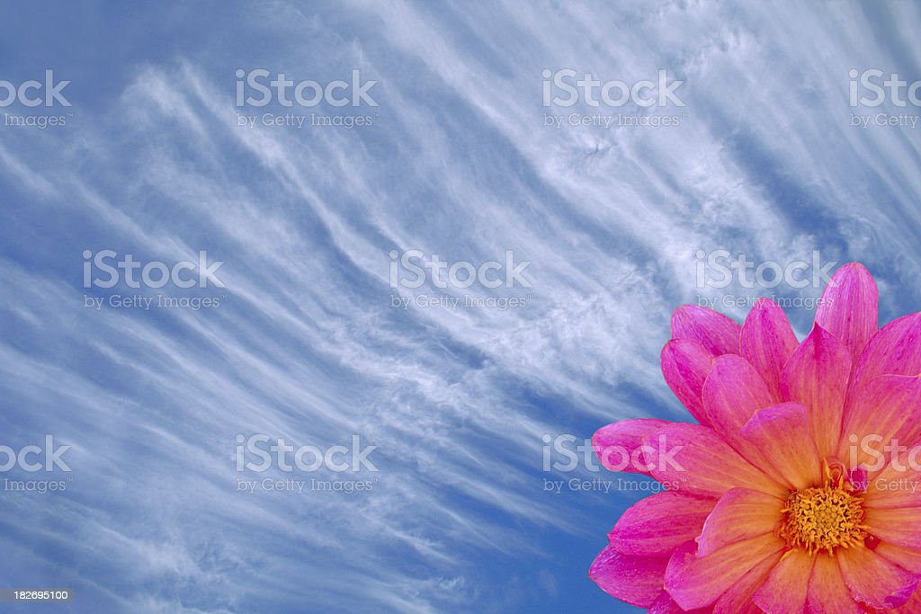Flower Sky royalty-free stock photo