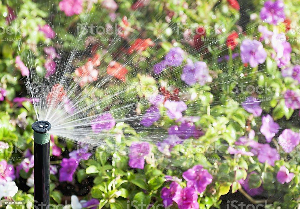 Flower Sprinkler Action stock photo