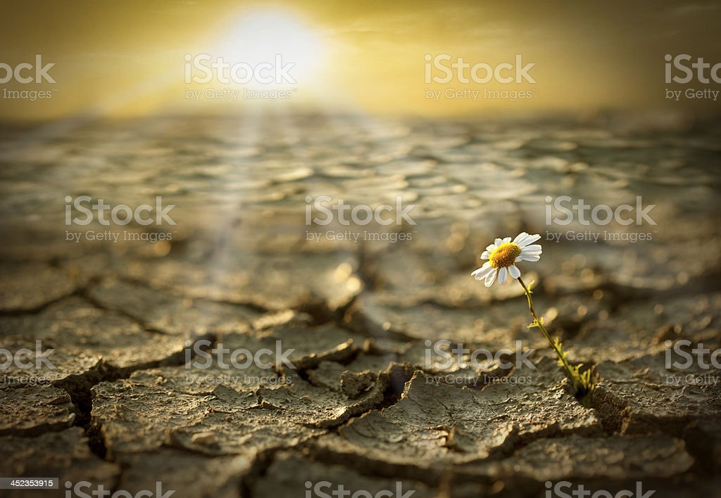 Flower Sprouting Through the Cracks stock photo