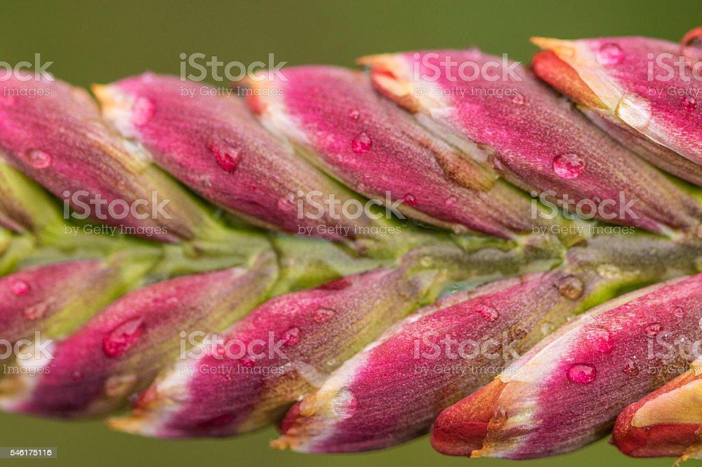 Flower Stalk stock photo