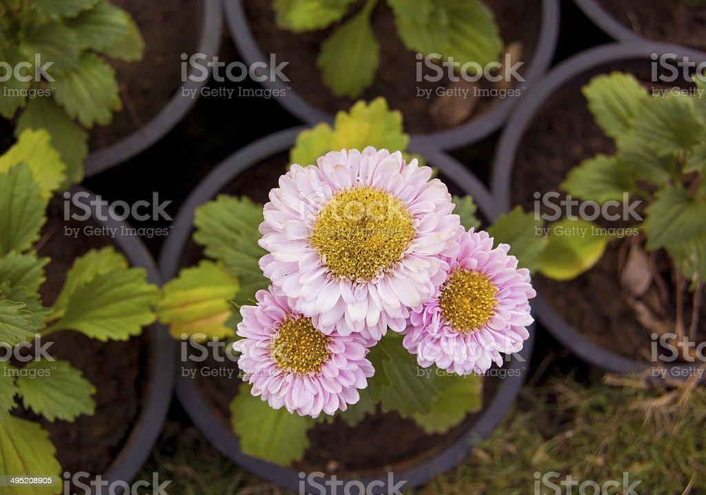 Flower - Stock Image stock photo