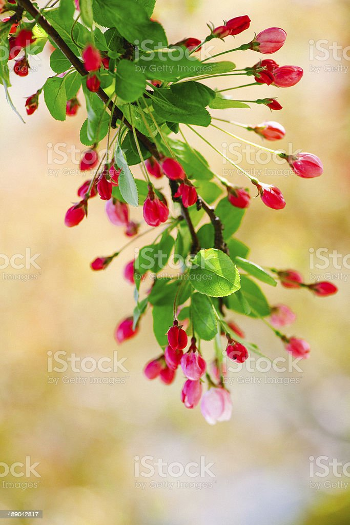 Flower tree blooming royalty-free stock photo