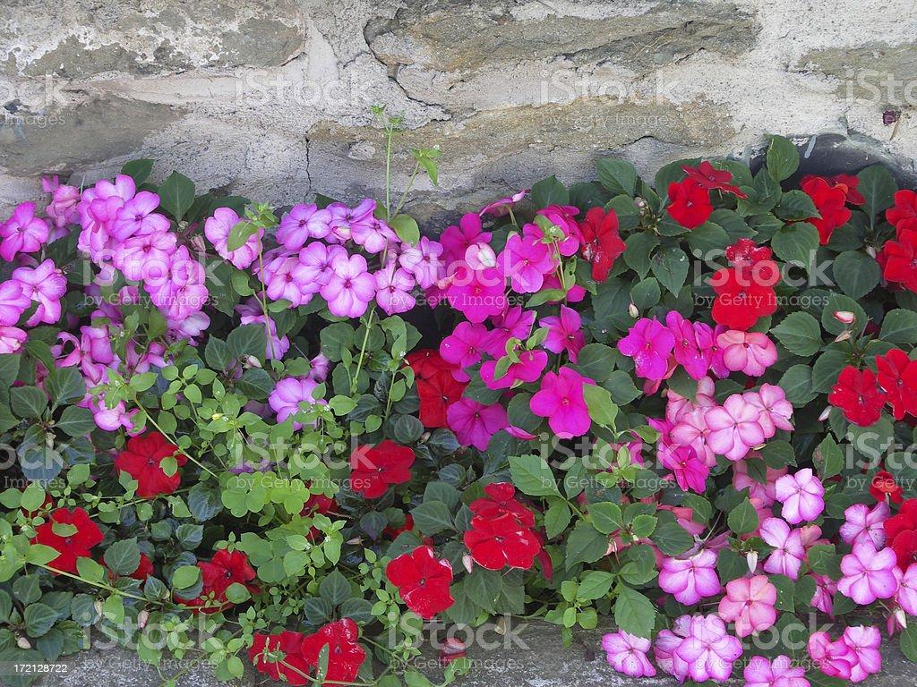 flower wall stock photo