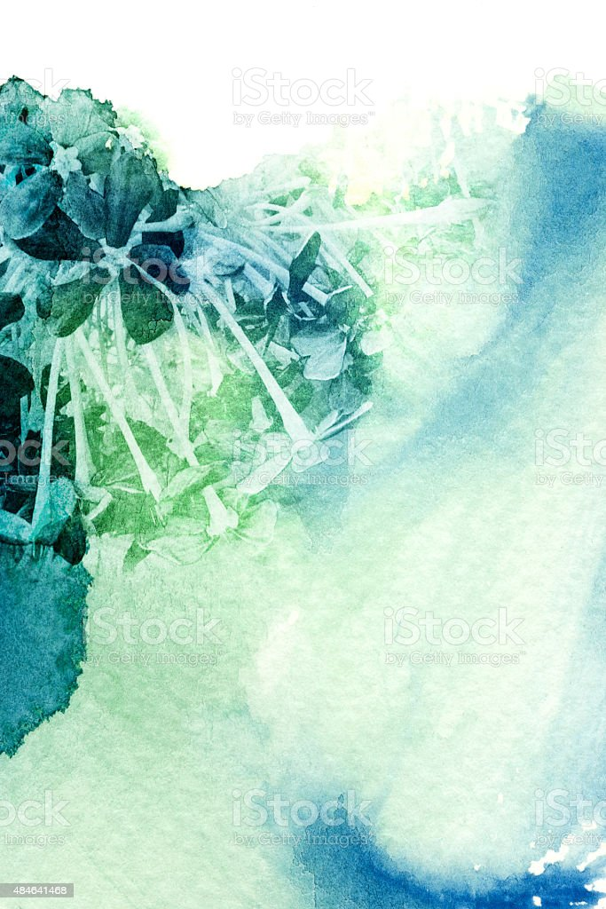 Flower watercolor illustration. stock photo