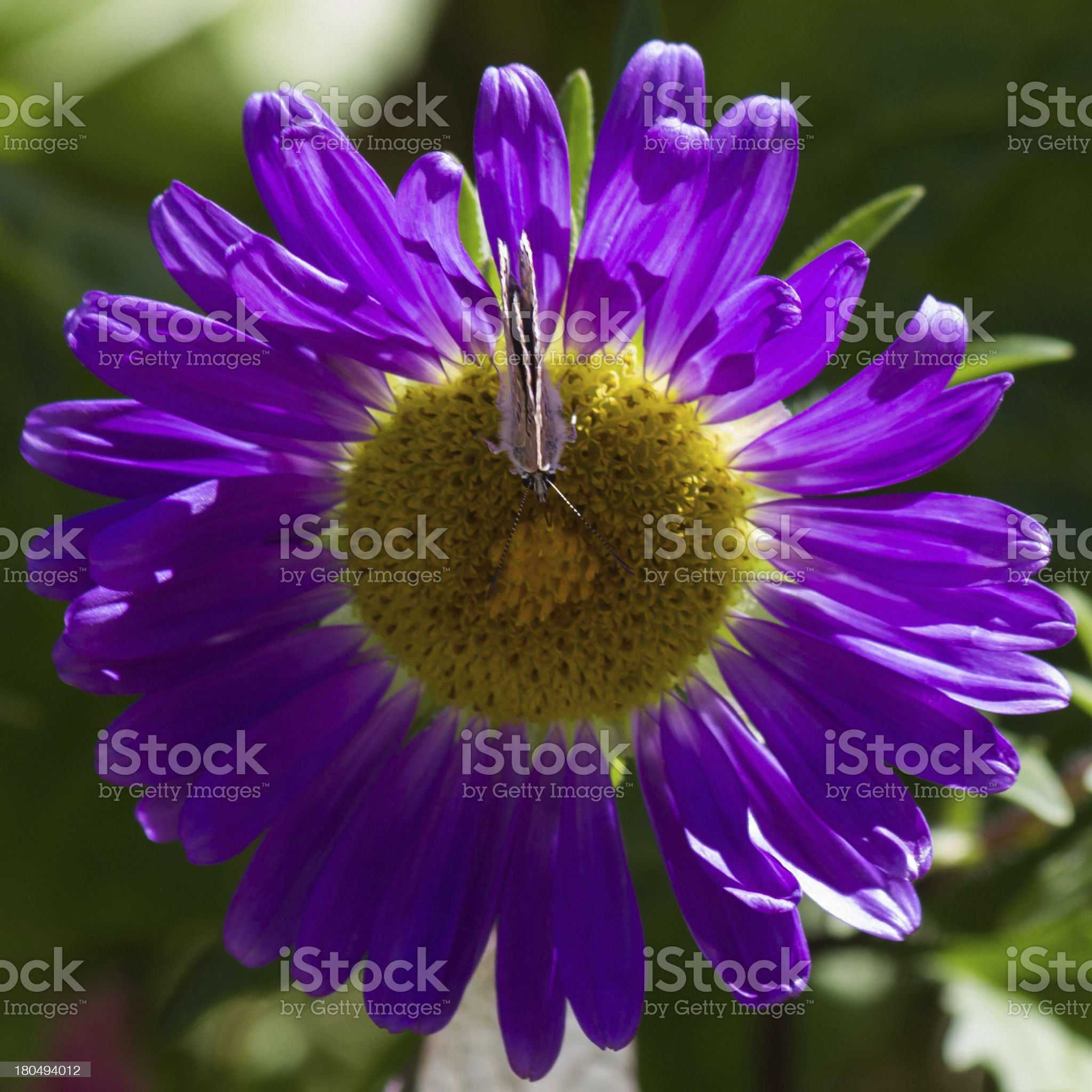 flower with butterfly - flor con mariposa royalty-free stock photo