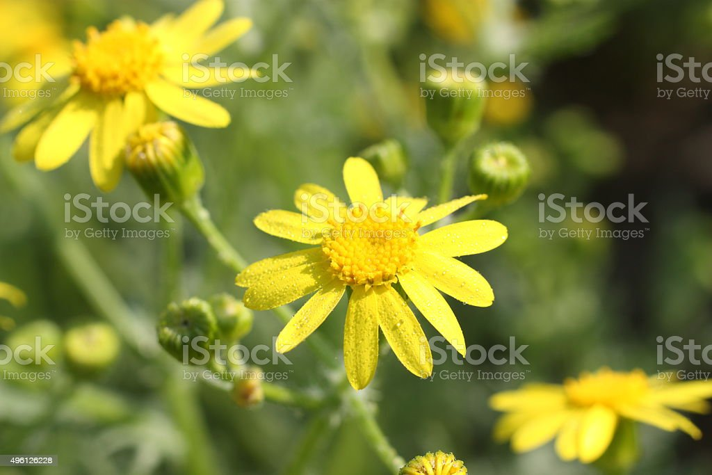 Flower with dew royalty-free stock photo