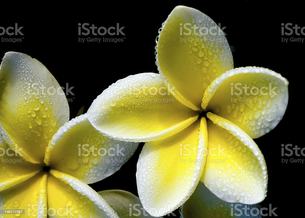 Flower with droplets like wind turbine royalty-free stock photo