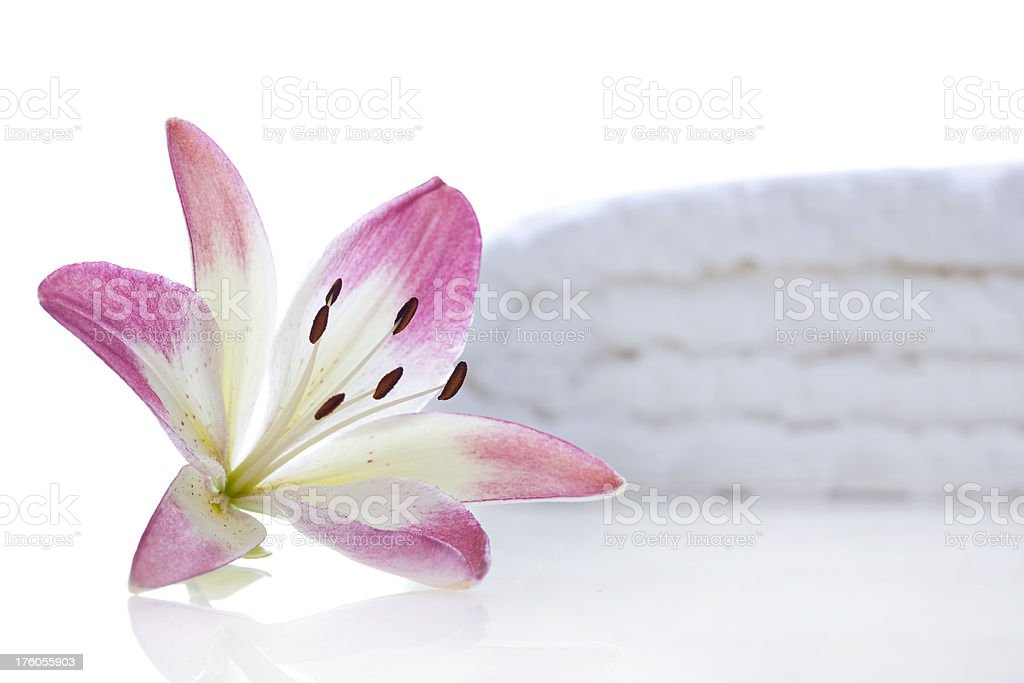 Flower with spa towel royalty-free stock photo