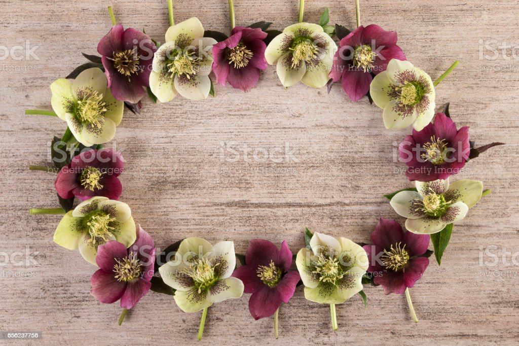 Flower wreath made of spring flowers lenten rose on rustic background. Flat lay, copy space stock photo