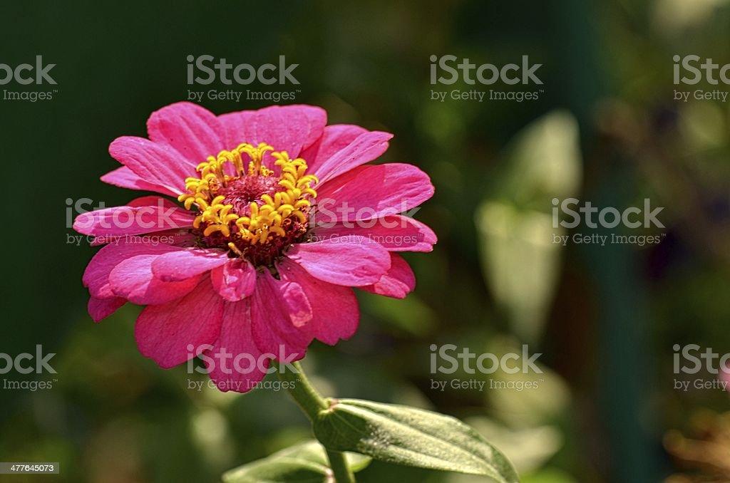 flower9 royalty-free stock photo