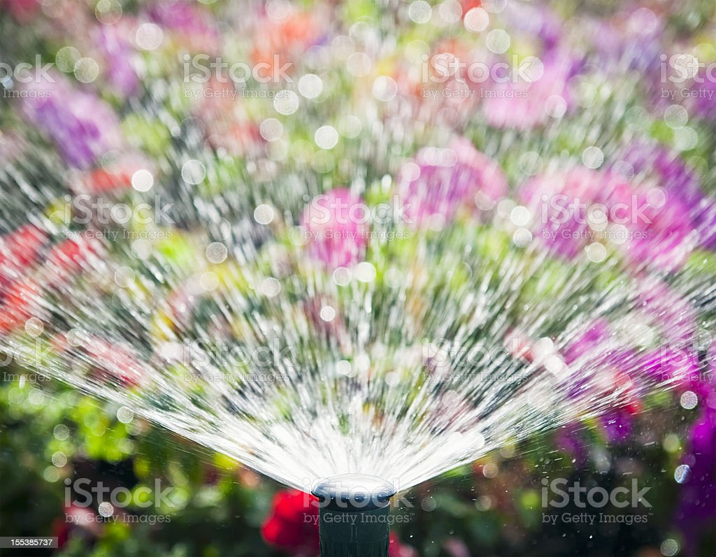 Flowerbed Automatic Water Sprinkler stock photo