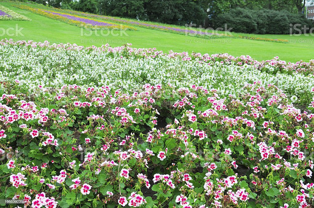 flowerbed in city park royalty-free stock photo