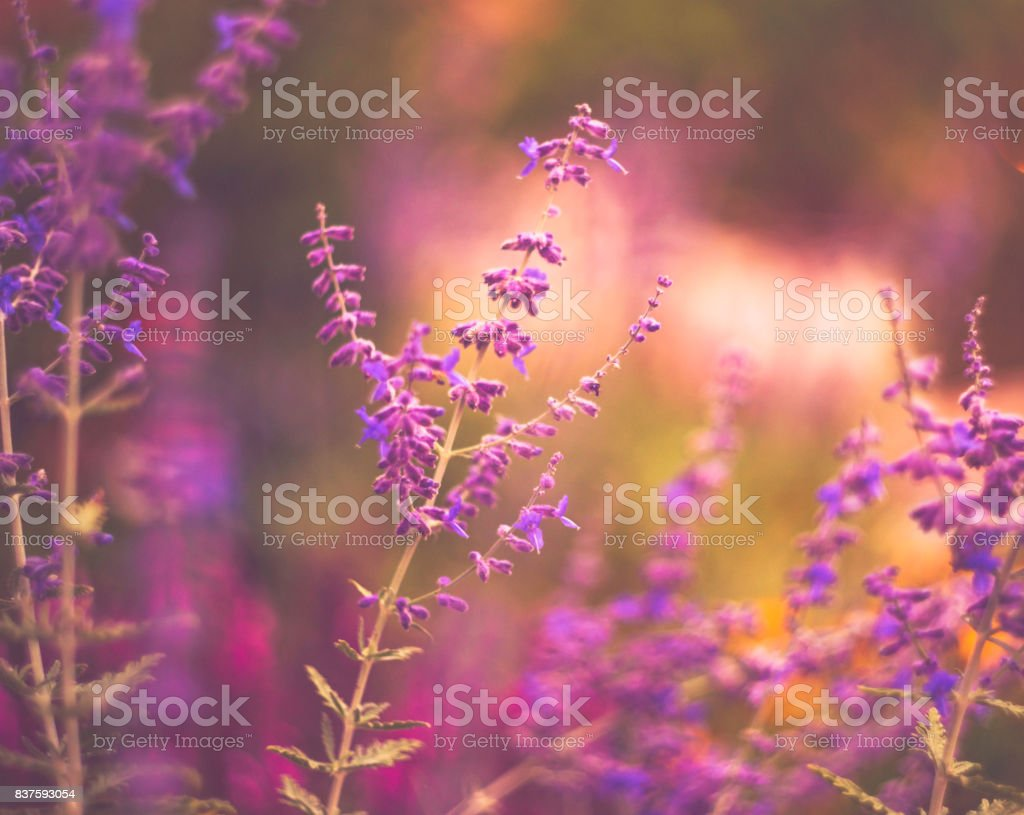 Flowerbed in natural sunlight. Flower Immersion stock photo