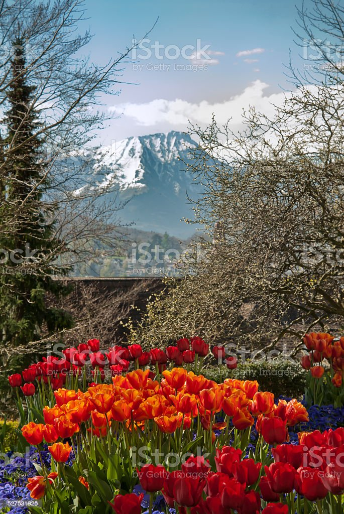 Flowerbed in the city of Lucern in Switzerland stock photo