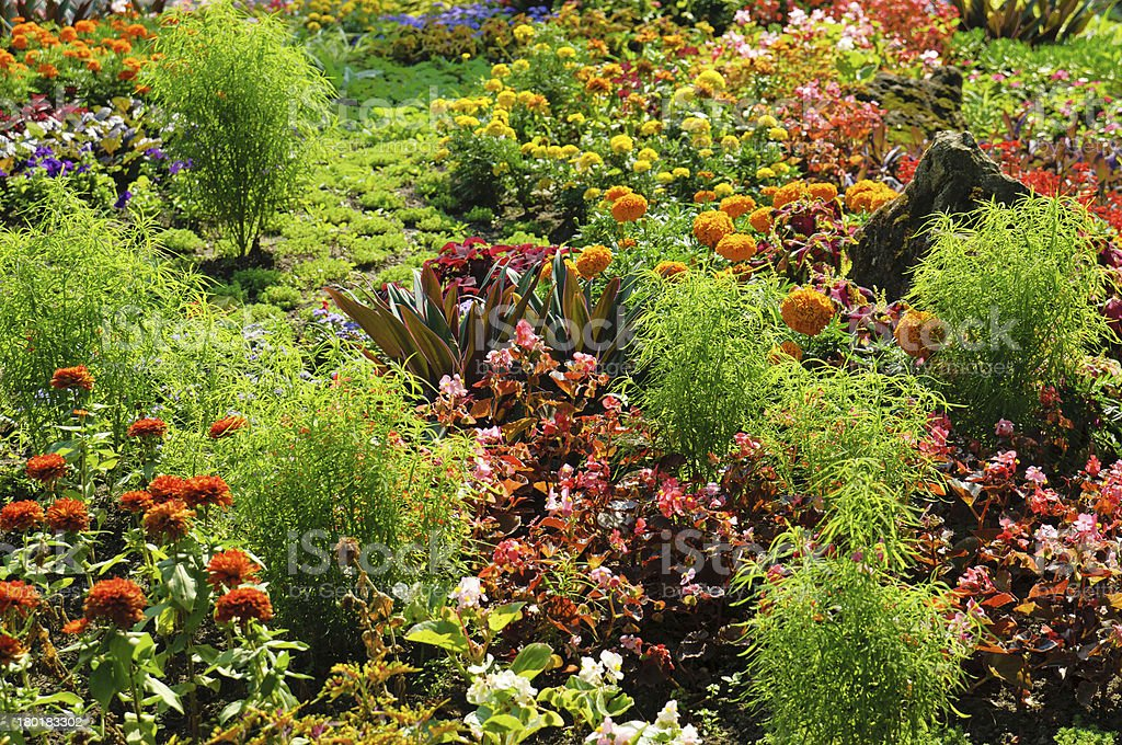 Flowerbed in the park royalty-free stock photo
