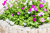 Flowerbed made of bricks in the street with bright colors